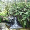 rainforest and waterfall in blue mountains sydney australia